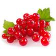 Aroma: Rote Johannisbeeren